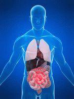 Рак кишечника симптомы заболевания