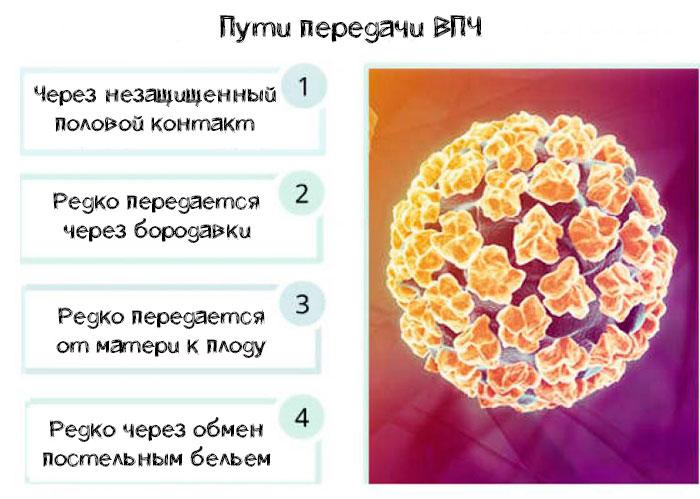пути передачи ВПЧ