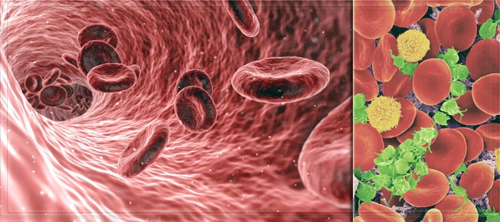 За что отвечают эритроциты в крови